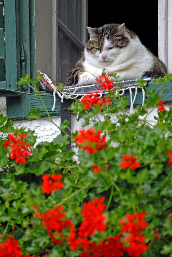 Fattycatty