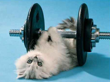 cat-exercise