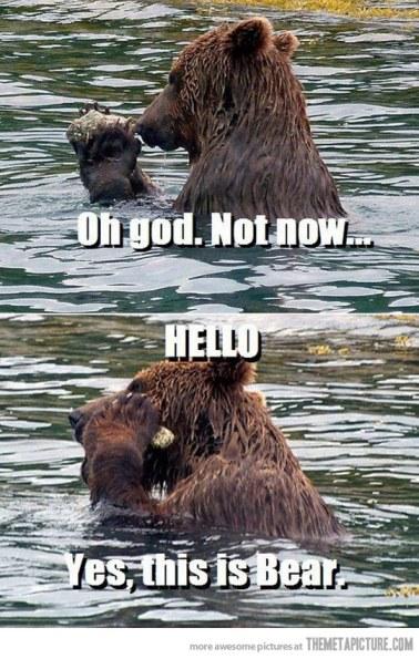 funny-bear-talking-phone