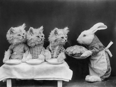 harry-whittier-living-kittens-dressed-up-are-served-a-meal-by-their-chef-rabbit