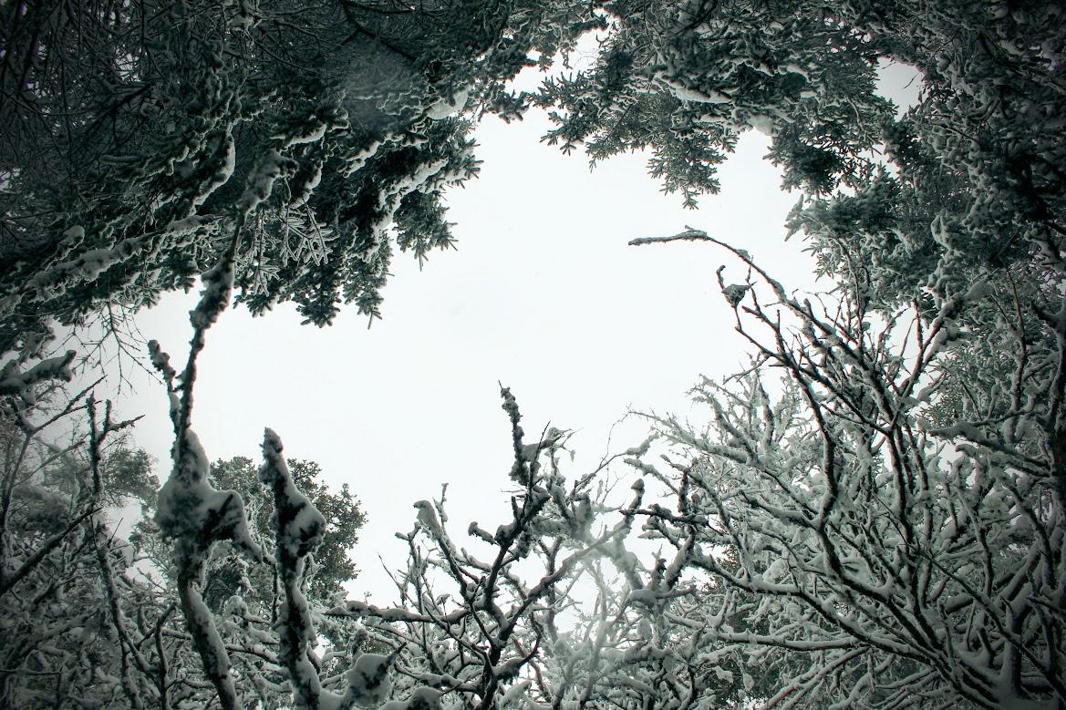 Snow Flamks