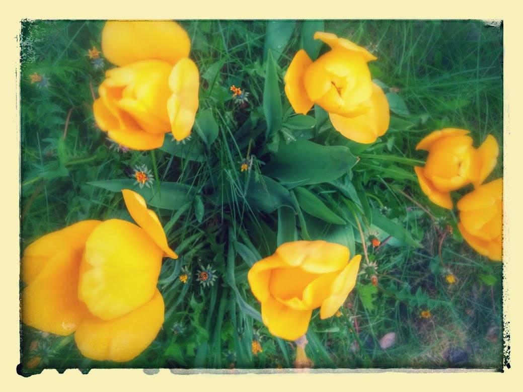 Joony Blumes